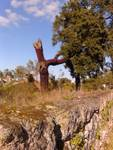 Tinalhas tree landscape Feb2013
