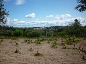 Spring vineyards