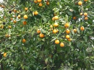 Bags of vitamin C