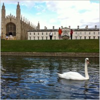 kingscollege_cambridge_swan_236516