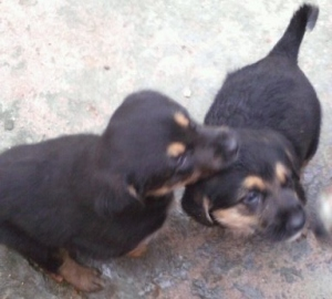 Puppies, puppies in Portugal, stray dogs in Portugal