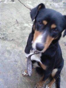 dog, stray dog, stray dog in portugal