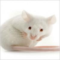 I can cope with mice though.