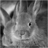 bunny_rabbit_206723