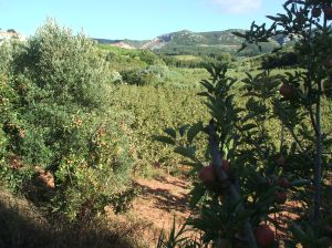 Serra de Montejunto, pear orchard, apple orchard, orchad, pear tree, travel, tourism, rural portugal