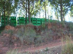 crates, countryside portugal, pear crates, fruit farming