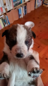 Puppy in Portugal, brown and white puppy, abandoned puppies